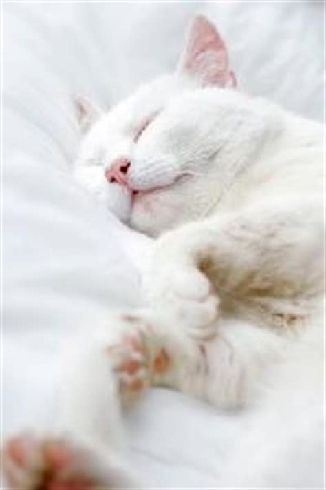 cat pee on comforter washing cat bedding