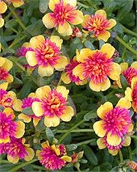 high heat plants 75 best images about flower bed ideas on pinterest