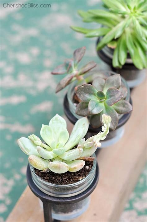 unique planters for succulents 227 best a few of our favorite things images on pinterest