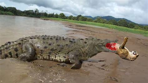 GIANT CROCODILE ATTACKS COMPILATION | BIGGEST CROCODILE ...