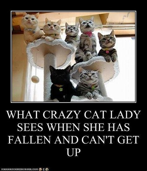 Funny Cat Lady Memes - crazy cat lady meme by lizzy22370 memedroid