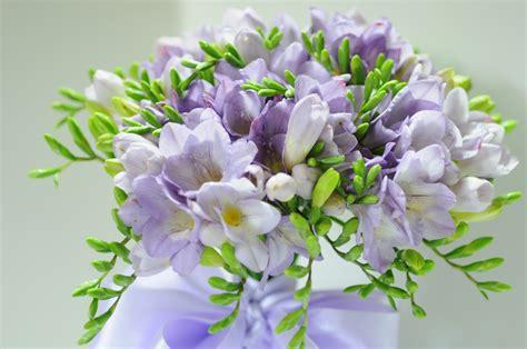fresie fiori mazzolino fresie 48 giardinaggio irregolare