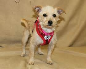 Zoe s friends animal rescue hooray i m adopted 276 doggies adopted
