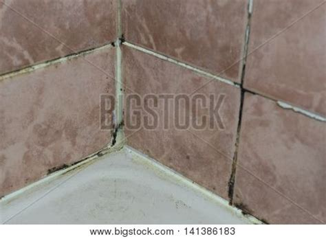 Bathroom Wall Mold Treatment Black Mold Growing On Shower Grouted Joints Tile In