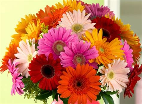 most popular flower health disease and genetics gerbera flower the fifth