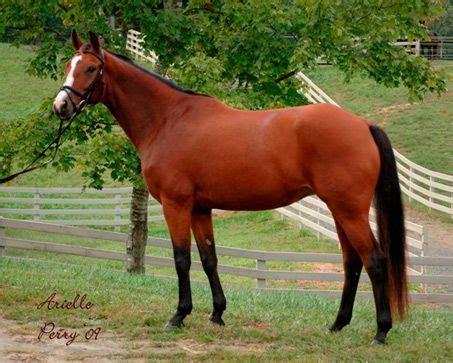 Sho Kuda Mane 55 best blood bay horses images on beautiful