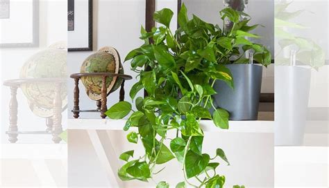 indoor plants for dark rooms 4 indoor plants for dark rooms lifeberrys com