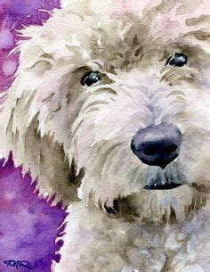 david setter doodle 113 best images about dogs on pinterest