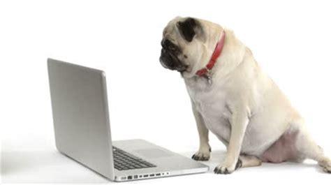 pug computer pug eaumg