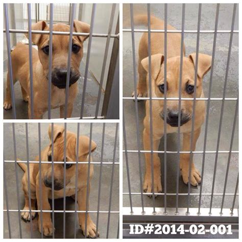 puppies for adoption in ga adoptable dogs for february 6 2014 politics caigns and