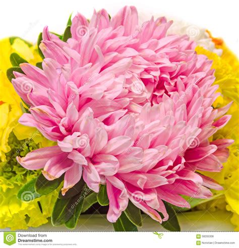 mum flower arrangement pink jpeg pink purple colored chrysanthemum flowers bouquet up floral arrangement stock photo
