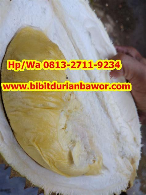 Bibit Durian Bawor Jakarta bibit pohon durian archives penjual bibit durian beli