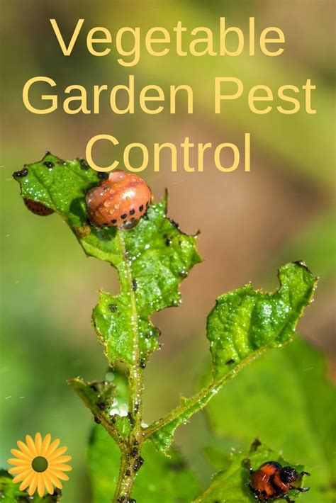 174 best garden pests images on pinterest agriculture