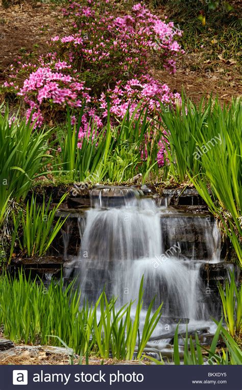 Edisto Gardens by Blooming Azalea Bush And Small Waterfall In Edisto