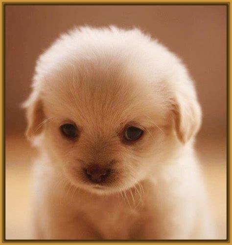 imagenes de animales tiernos para descargar perritos cachorros tiernos para descargar imagenes de