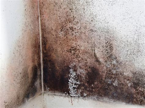 black mold images cleaning black mold hgtv
