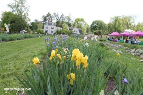 Presby Iris Garden by Presby Memorial Iris Gardens In Montclair Nj Nj