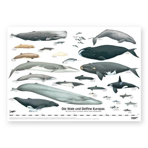 wal poster plakat wale und delfine europas greenpeace magazin