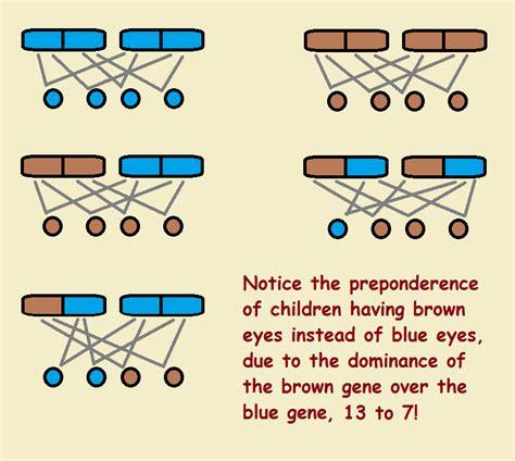 eye color genetics eye color and genetic inheritance dominant vs recessive