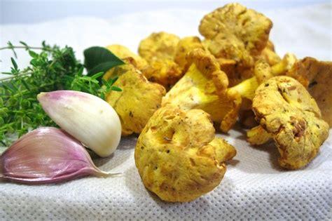 cucinare funghi finferli ricette per cucinare i finferli dissapore