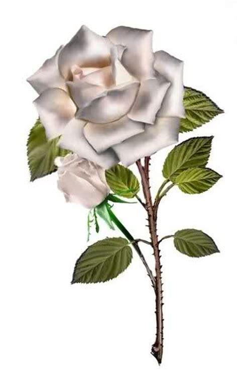 imagenes de rosas blancas y rojas animadas poemas frases y rosas imagenes con mensajes de amistad