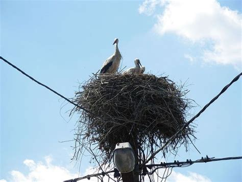 bird nests in unusual places 14 photos izismile com