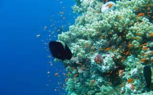 Photo 6 underwater aquarium wallpaper 1920x1200 elphstone reef 114 jpg