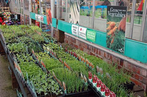 Nstrip Vegethablerovs vegetable plants bellis brothers farm shop garden centre and your own