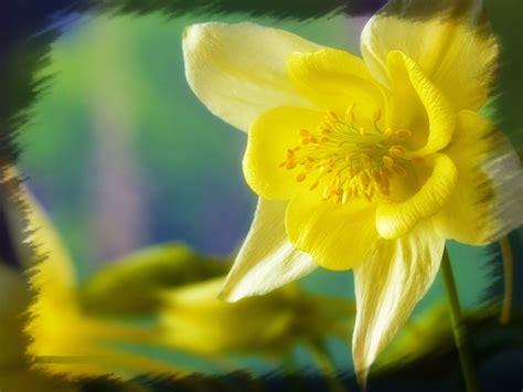 imagenes de rosas descargar gratis excelentes fotos flores gratis para descargar imagenes