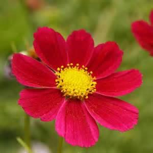 fleurs de bordure liste ooreka