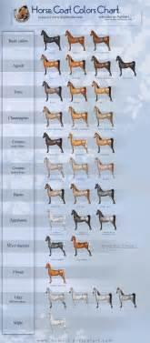 colors of horses coat colors chart by aomori on deviantart