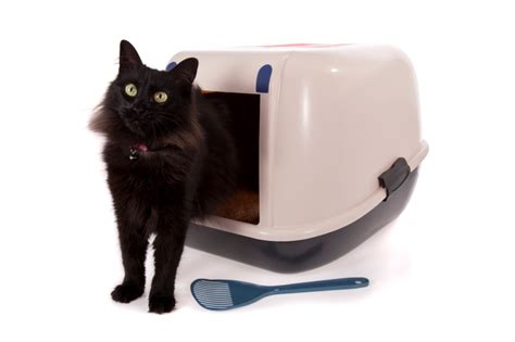 Blood In Cats Stool by The Cat Litter Conundrum 1st Rate Pet Services