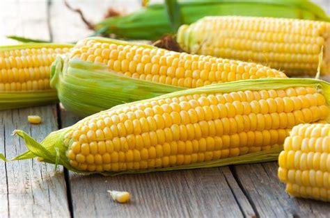 manfaat jagung bagi penderita asam urat