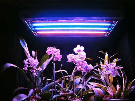 Fluorescent Lighting: T5 Fluorescent Grow Lights Reviews