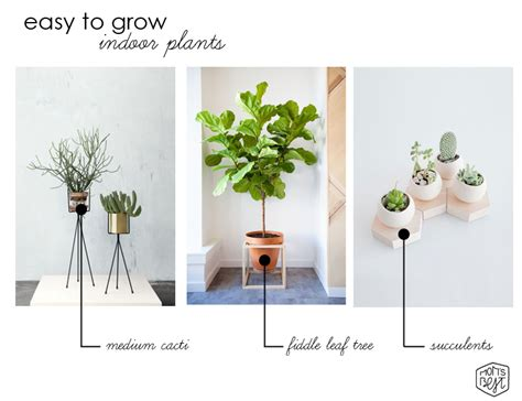 cool small plants to grow cool modern design trend easy to grow indoor plants