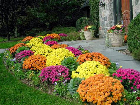 Fall Flower Gardening Planting Flowers For Fall And Winter