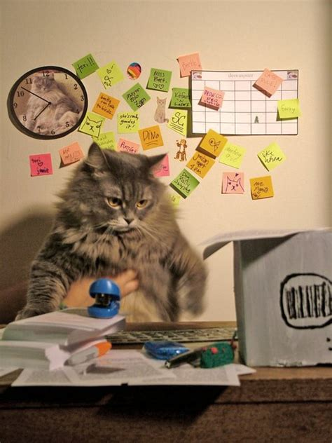 Office Cat by Career Cats