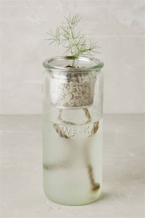affordable self watering planter lets you grow a countertop garden stylish self watering gardening kit lets you grow herbs