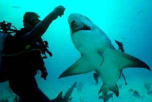 Marine Biologist Working Conditions by Gambassa Report Project Stedman S Shark Biologist Reportsreport