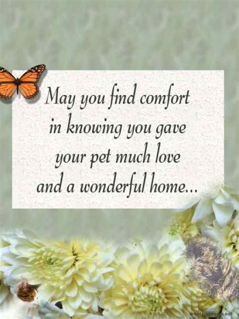 comforting words for loss of a pet pet loss poetry pet loss cards by winnie rogers
