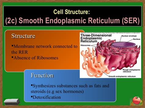 Smooth Endoplasmic Carcinogenic Detox by Cells 130814060400