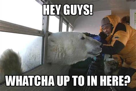 Funny Bear Meme - polar bear says hi funny pictures quotes memes jokes