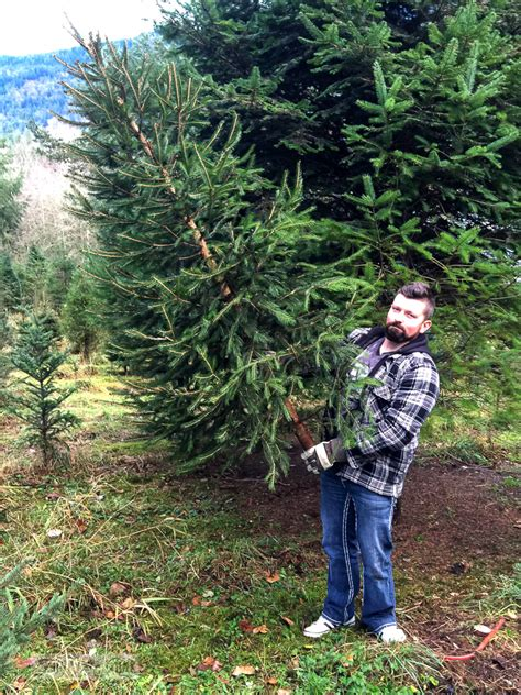 a visit to the christmas tree farm under protest funky