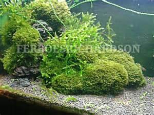 aquascape yang indah inspirasi aquascape mungil yang indah ferboes