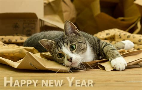 new year animal photos happy new year 2014 by hoschie on deviantart