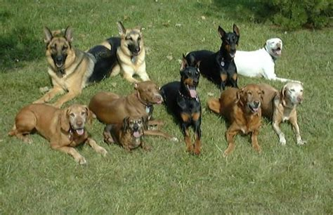 how many dogs can you how many dogs can you contain with an electric fence