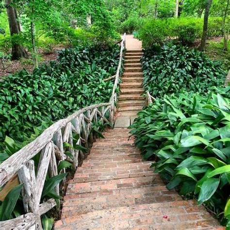Bayou Bend Collection And Gardens by Butterfly Garden Picture Of Bayou Bend Collection And