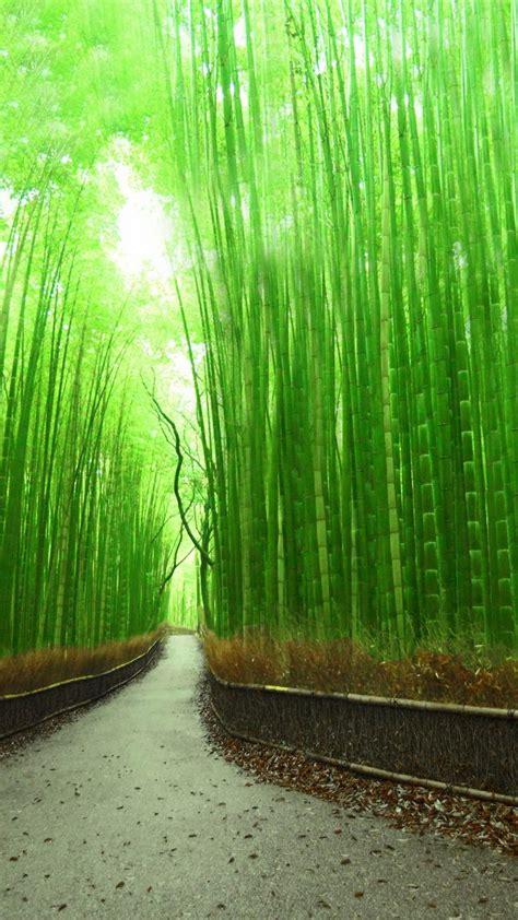 bamboo forest kyoto japan wallpaper  desktop