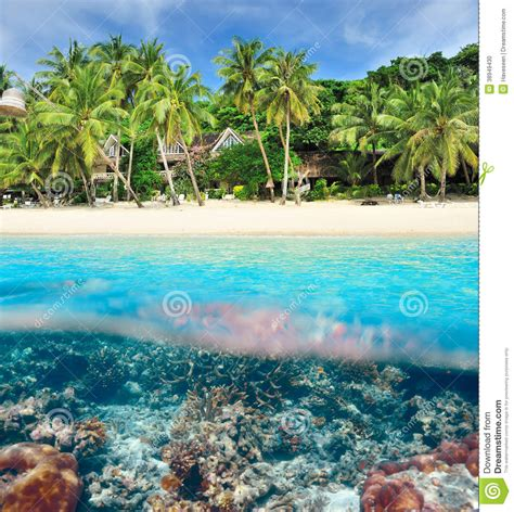 Vacation House Plans by Beach With Coral Reef Underwater View Stock Photo Image