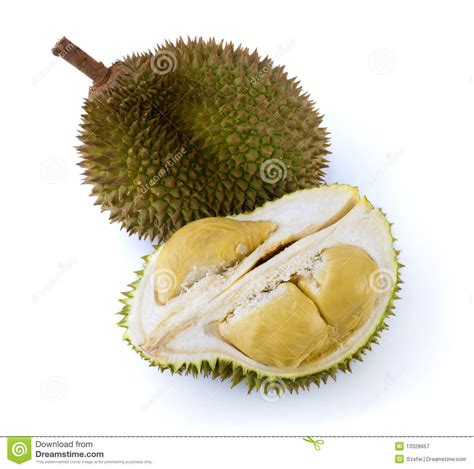 Mr Durian Asli Medan By Mr Durian durian royalty free stock photography image 13328657
